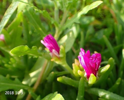 s-紫の花20181009