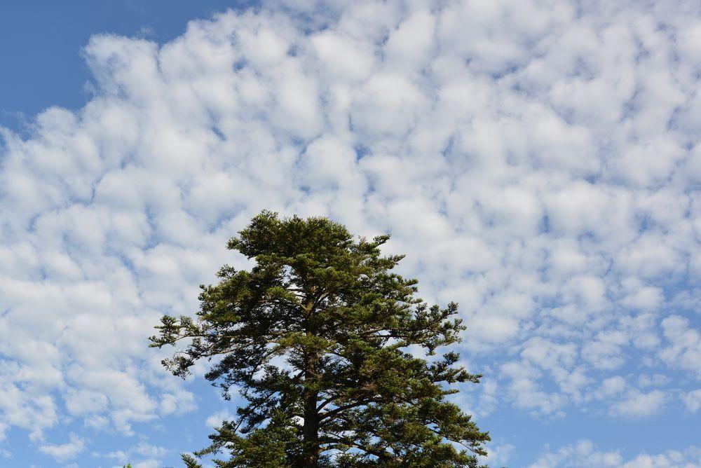夏空の雲-2