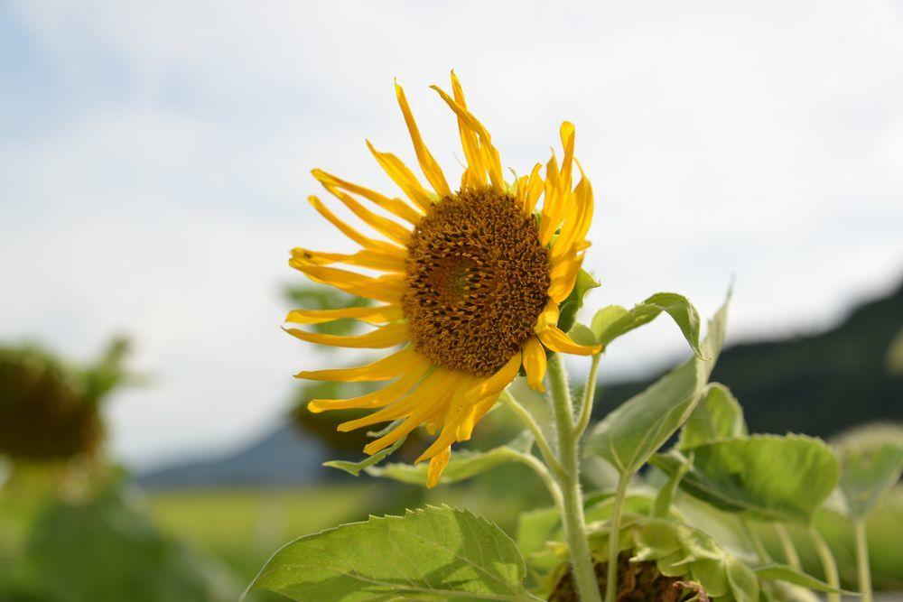 農道脇に花-1