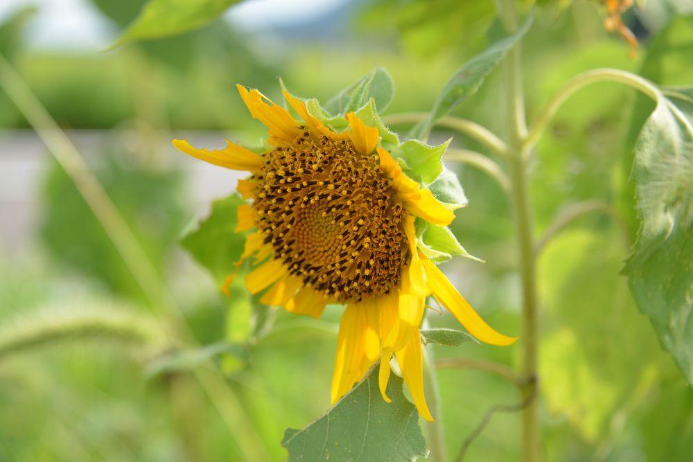 農道脇に花-2