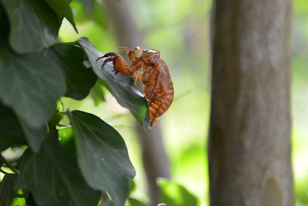 蝉の抜け殻-3