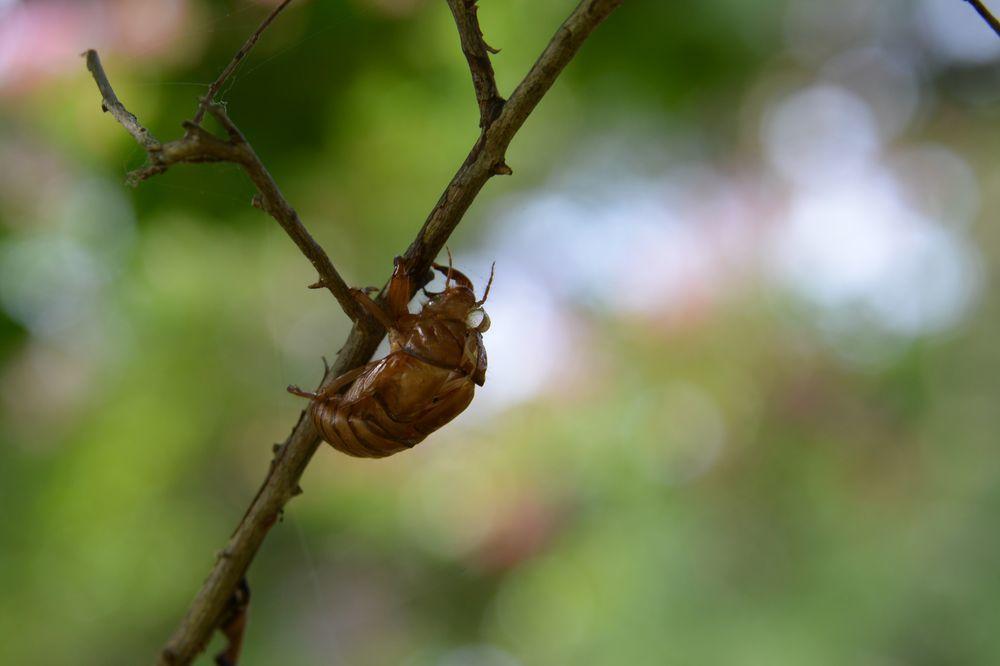 蝉の抜け殻-6