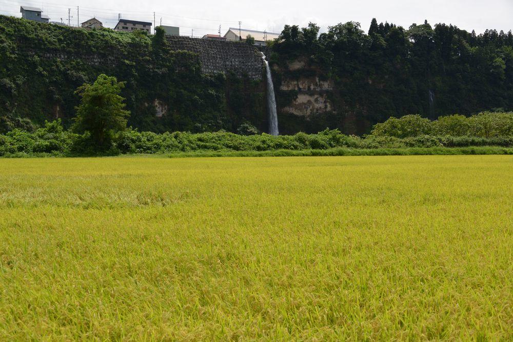 河岸段丘の滝Ⅱ-2