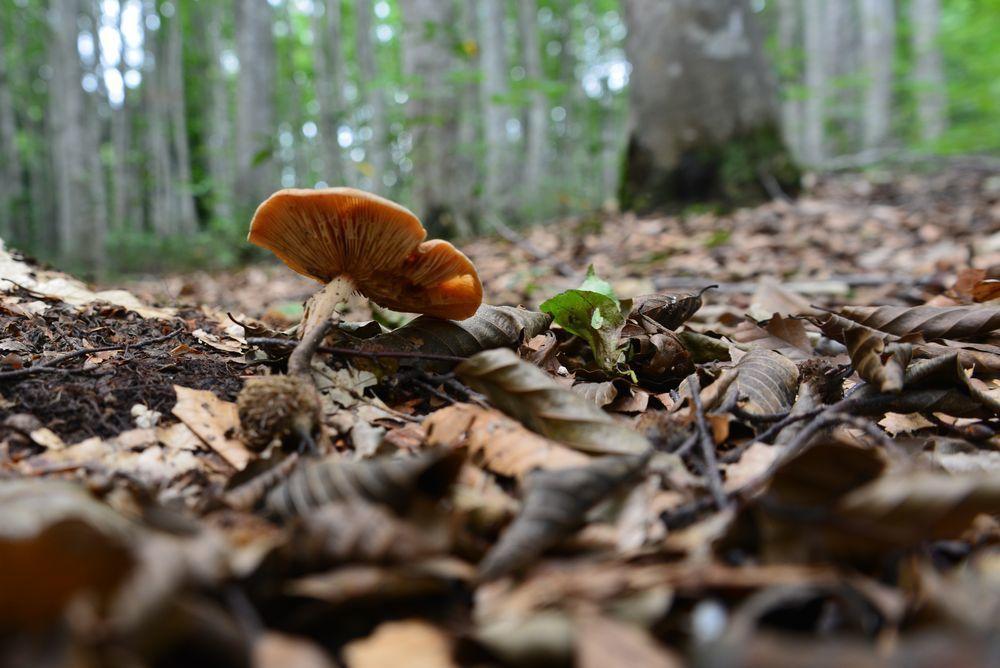 美人林のキノコー4