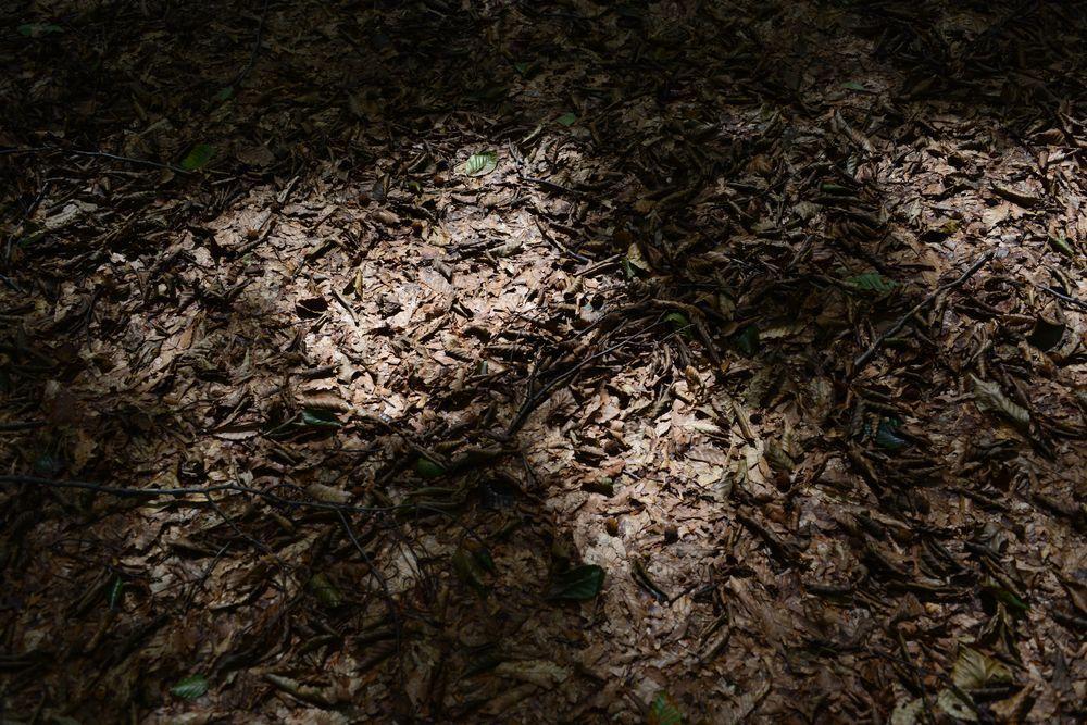 美人林のキノコ-6