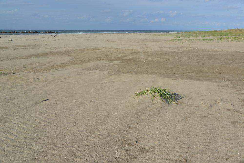 砂の浜-1
