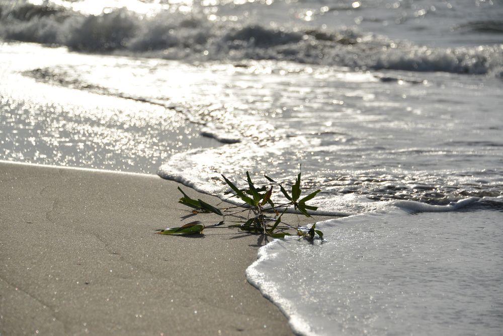 秋晴れの砂浜-3