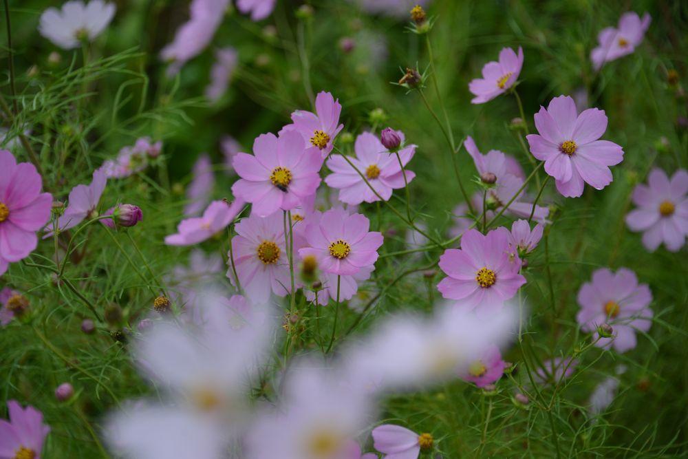 秋の草花-1-1
