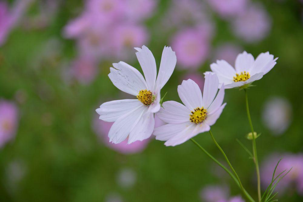 秋の草花-1-2