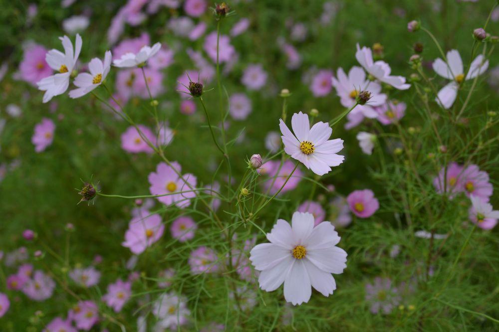 秋の草花-1-4