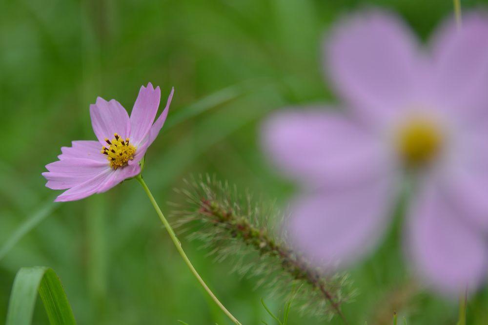秋の草花-1-6
