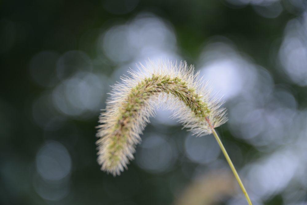 秋の草花-2-1