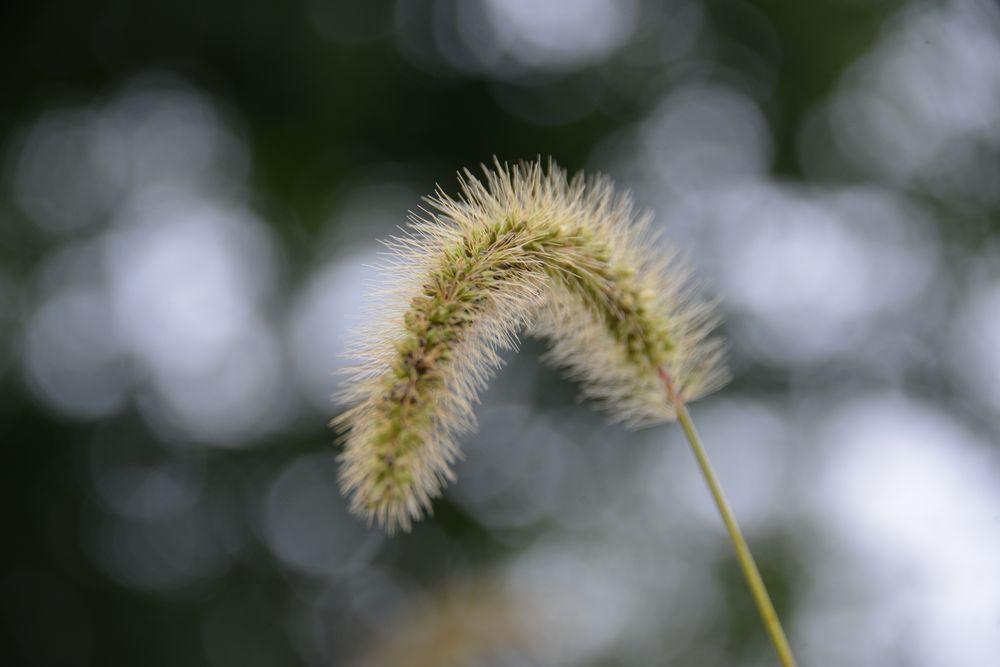 秋の草花-2-2