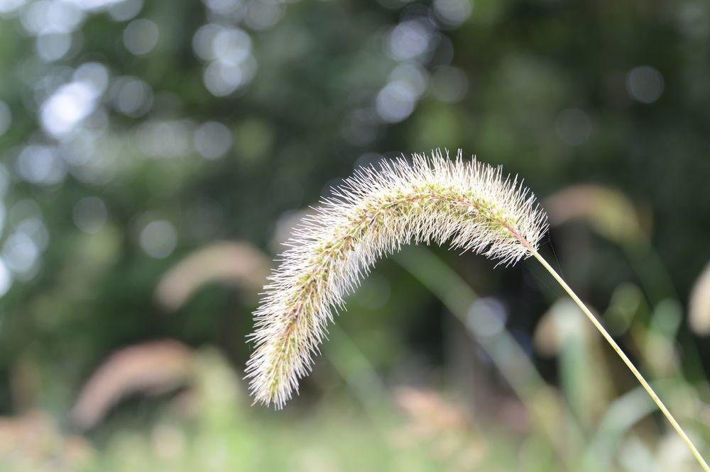 秋の草花-2-4