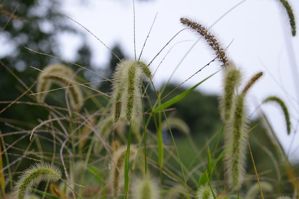 秋の草花-2-5