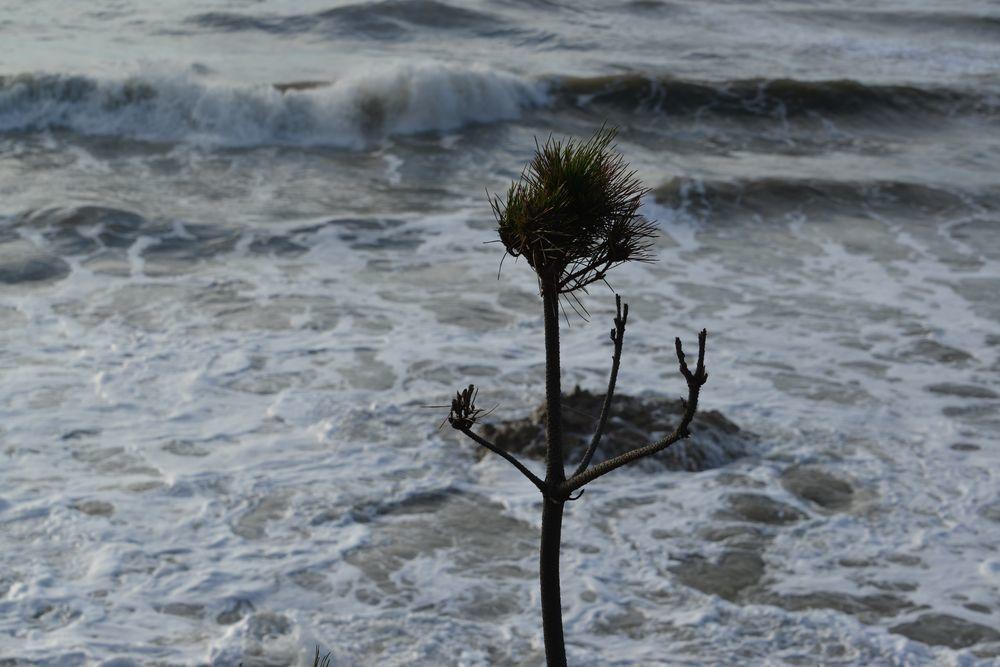 台風通過-6