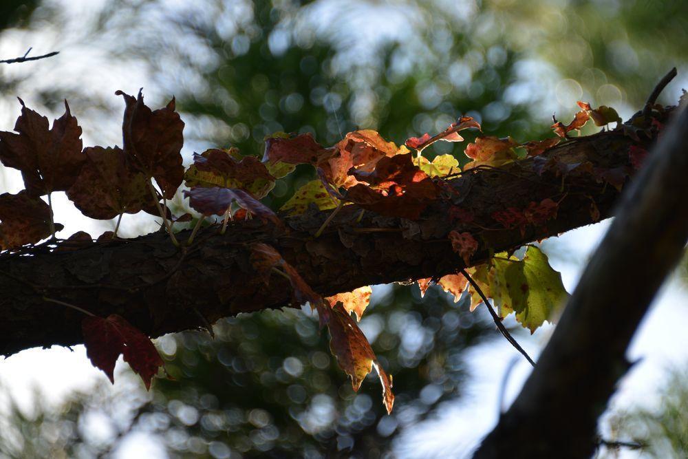 秋の里山-3
