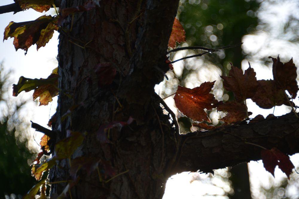 秋の里山-4