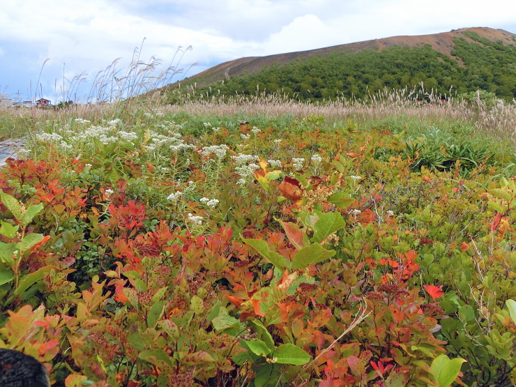 ランゲルハンス島の秋