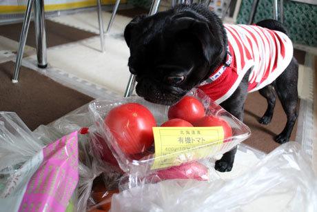 トマトですよ