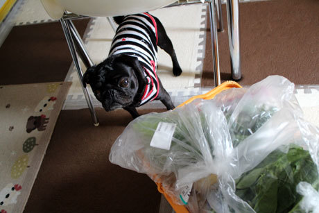 たくさんのお野菜。。。