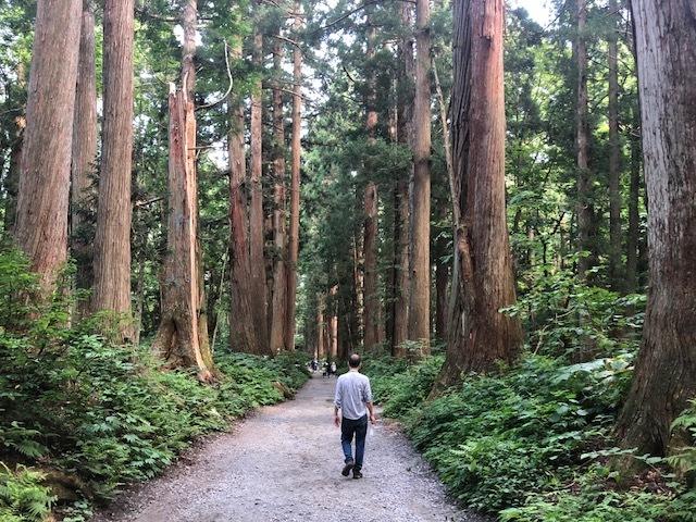 cedartrees.jpg
