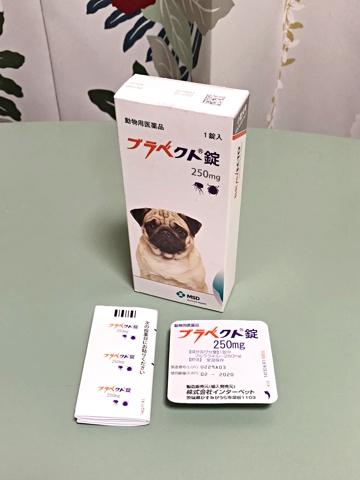dog1005