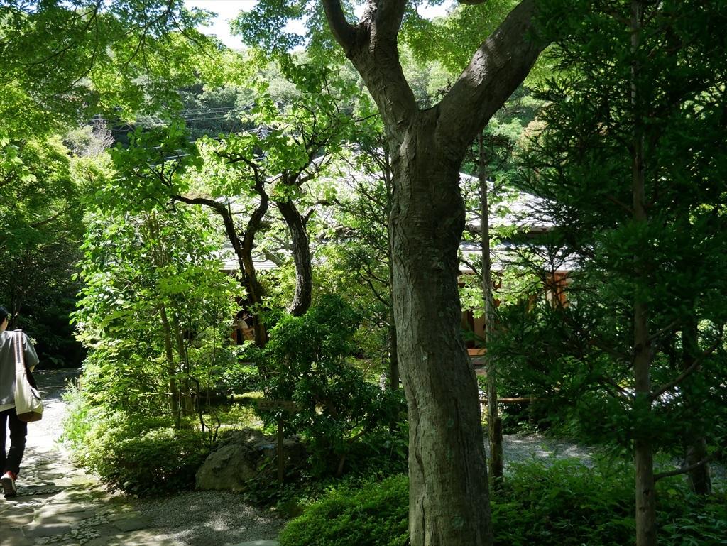 喜泉庵(きせんあん)と枯山水の庭_1