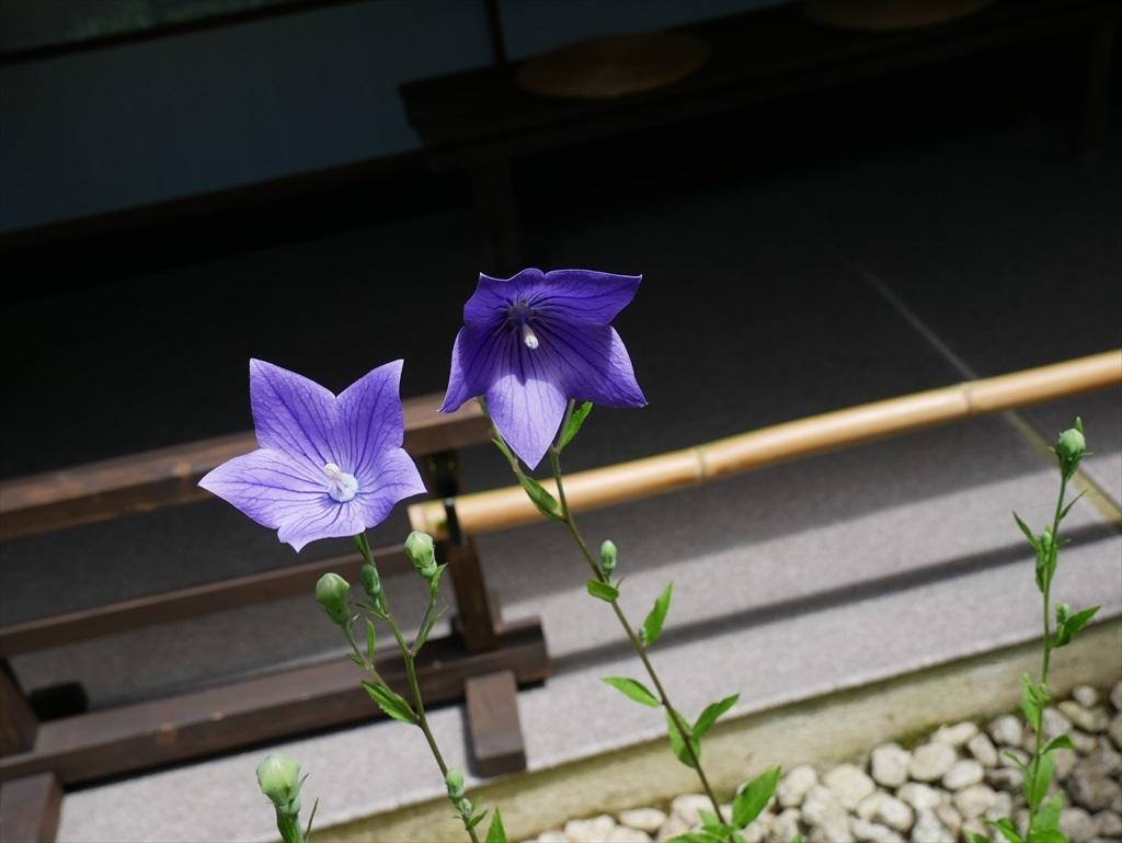庭園(1)_6