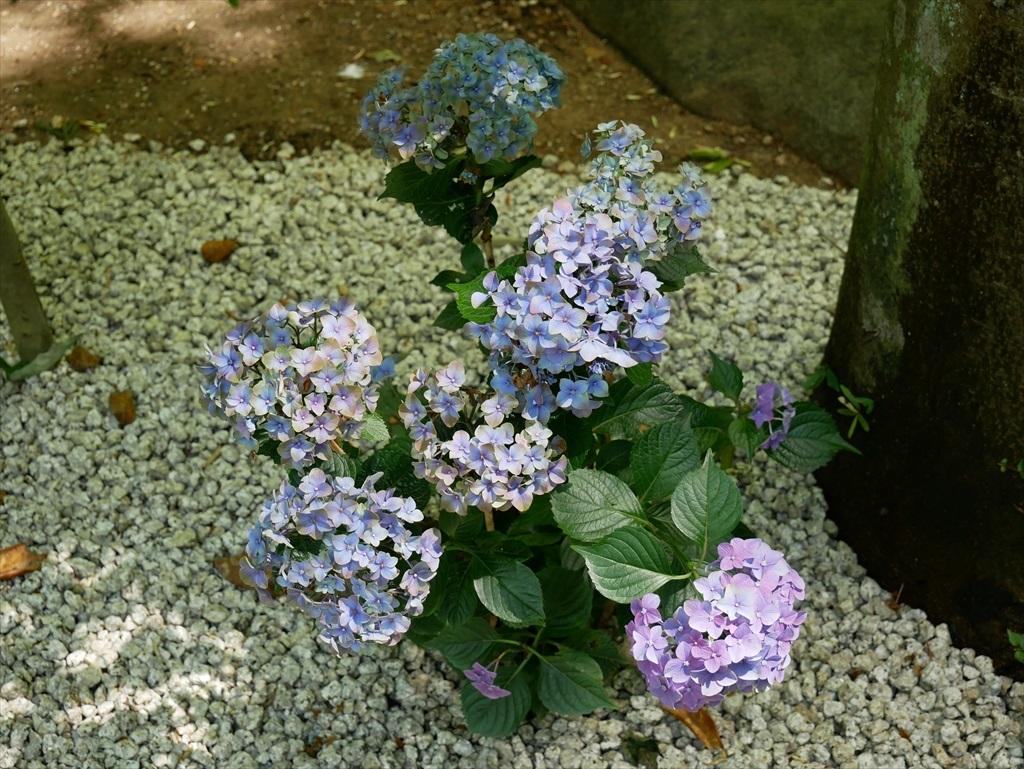 庭園(2)_3