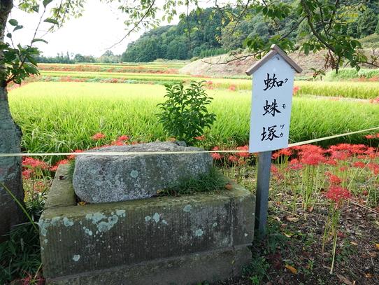 higanbana12_20181004145423ed1.jpg
