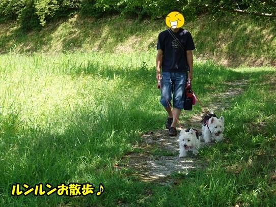 kibanakosumosu7.jpg