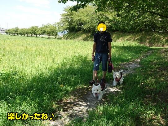 kibanakosumosu8.jpg