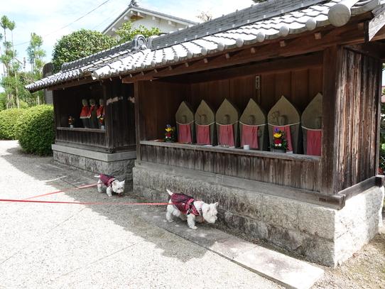kuhonji21.jpg