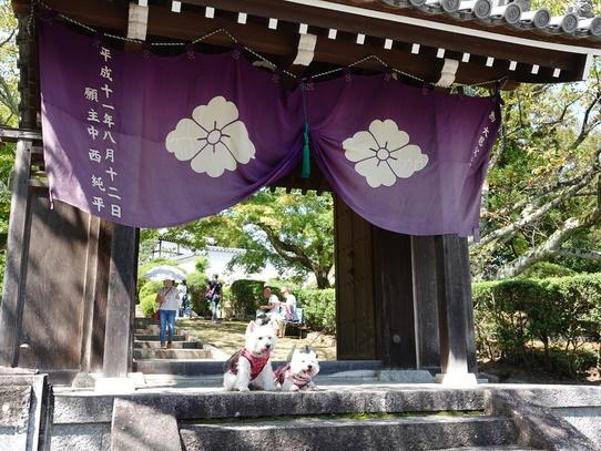 kuhonji_20181006170218a78.jpg