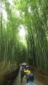 180901山のような観光客をかき分け竹林を抜ける