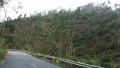 181006台風による倒木1