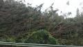 181006台風による倒木2
