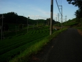 180825和束石寺の茶畑を抜けて行く