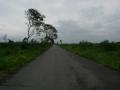 180908道沿いの木が無くなり明るくなっている