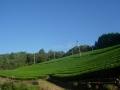 181008童仙房の茶畑と青空