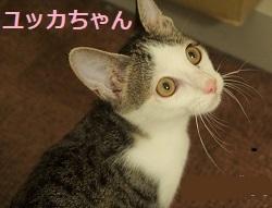 928_yukka.jpg