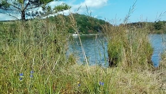 バラギ湖の草刈り