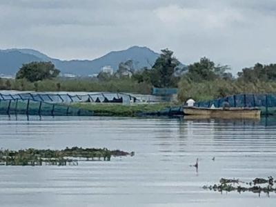 台風21号の強風と波ででフェンスが壊れたオオバナミズキンバイ保護エリア
