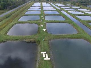シートで覆ってアオコの繁殖を阻害する実験が行われた池