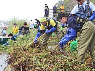 瀬田川のオオバナミズキンバイを駆除する学生ボランティア