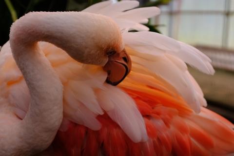 24花鳥園フラミンゴ