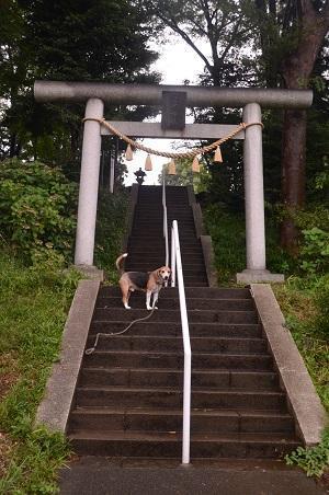 20180808日野若宮神社04