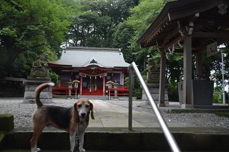 20180809元八王子八幡神社05