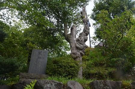 20180809能ヶ谷神社19